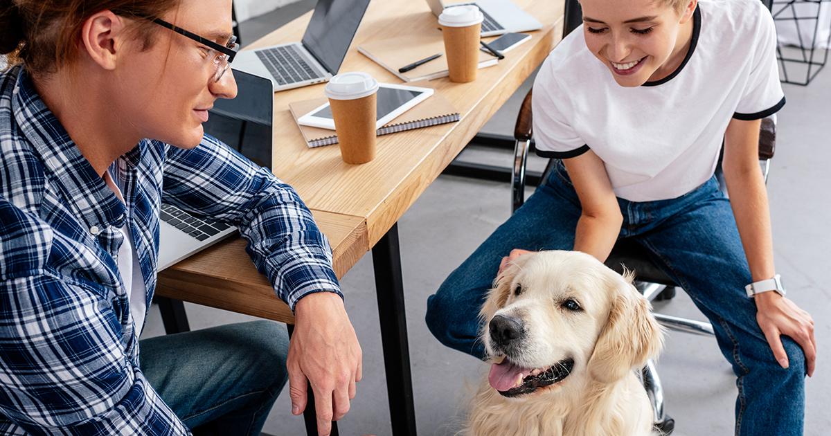 Hund på jobbet – vad gäller?